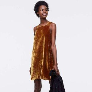 Ann Taylor - Loft Gold Velvet Dress